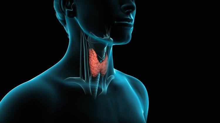 thyroid gland, hypothyroidism, thyroid disease