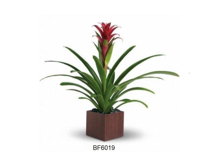 Brant Florist, Burlington, Burlington Florist BF6019