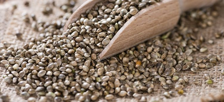 hemp seeds, cannabis, medicinal marijuana