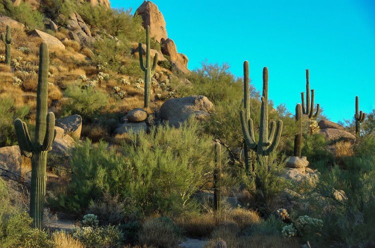 Cool things to do in Scottsdale