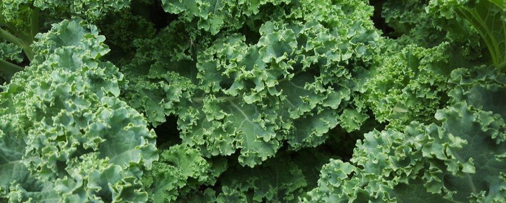 Kale Vs Lettuce