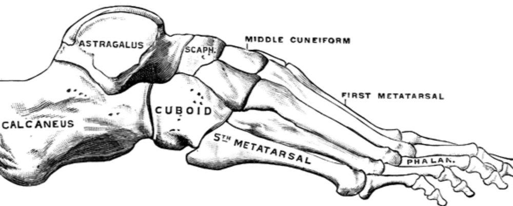 3F: Foot Fact File