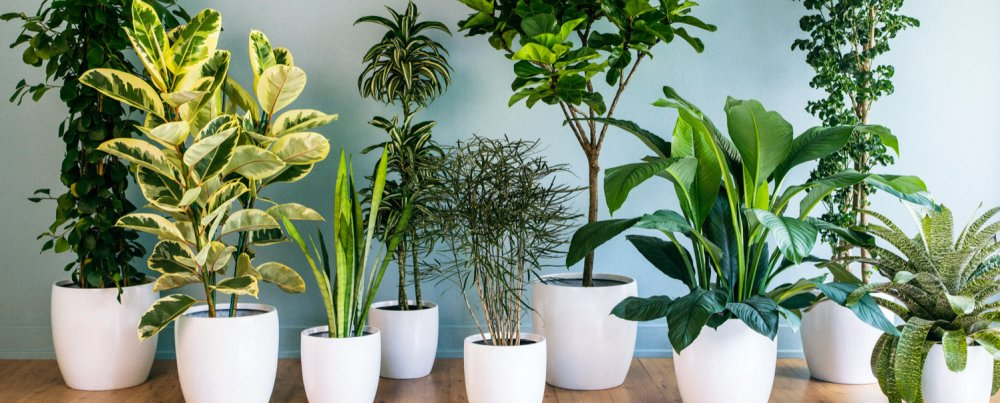 The Best Air Purifying Plants for Your Home