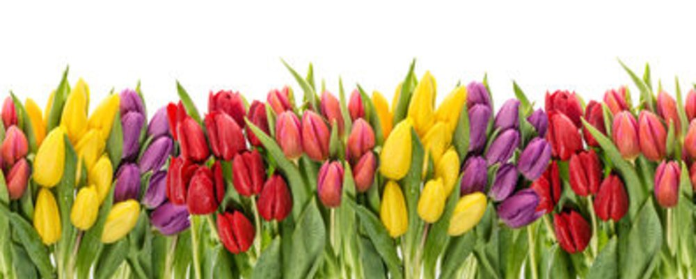 Our 4 Favourite Spring Flowers