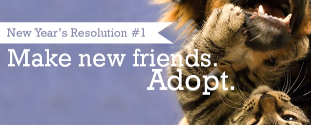New Year's Resolution-Make A New Friend by Adopting!