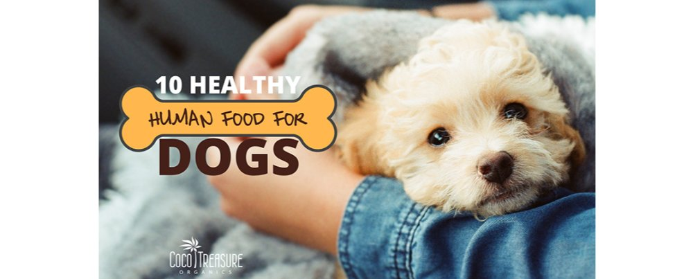 10 Healthy Human Foods for Dogs