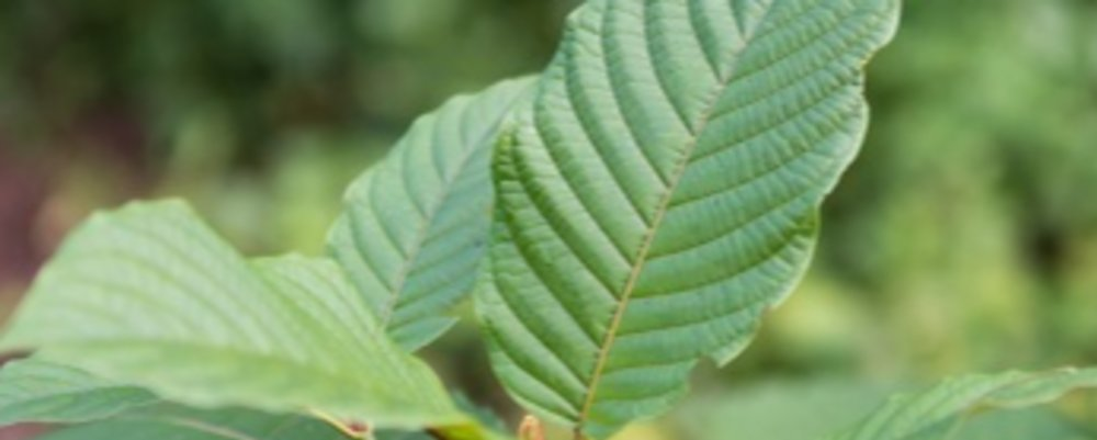 Kratom And Pregnancy