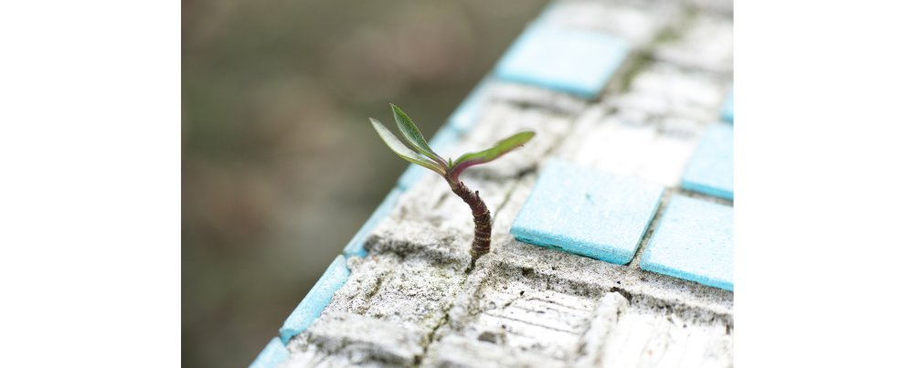 Tools to Thrive When Hope Feels Lost