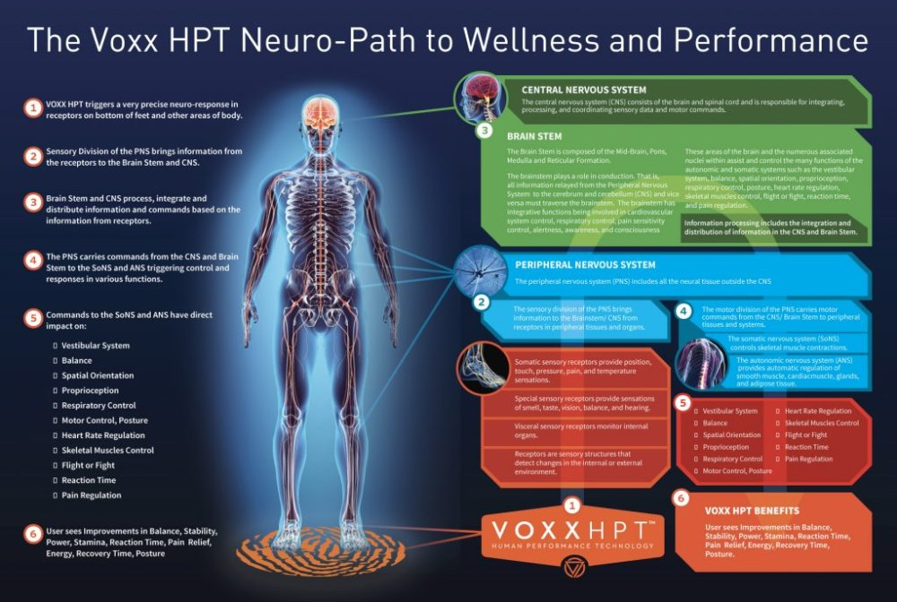 Voxx HPT Neuro-path to wellness and performance
