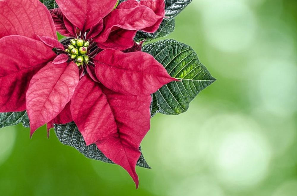 Spread Holiday Cheer by Sending Flowers