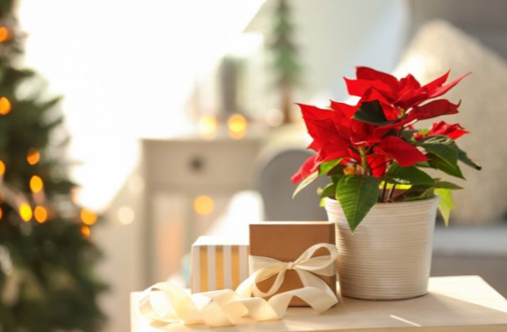 Christmas Flowers & Arrangements from Brant Florist, Burlington, ON