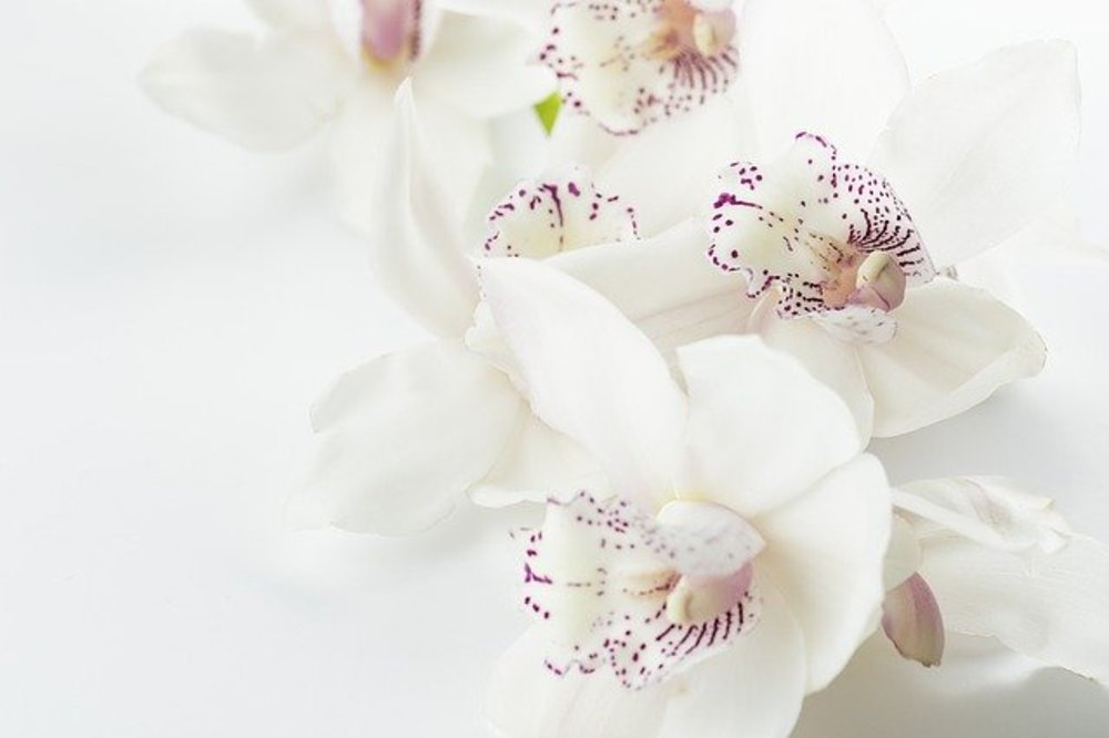 Why Send White Flowers from Brant Florists