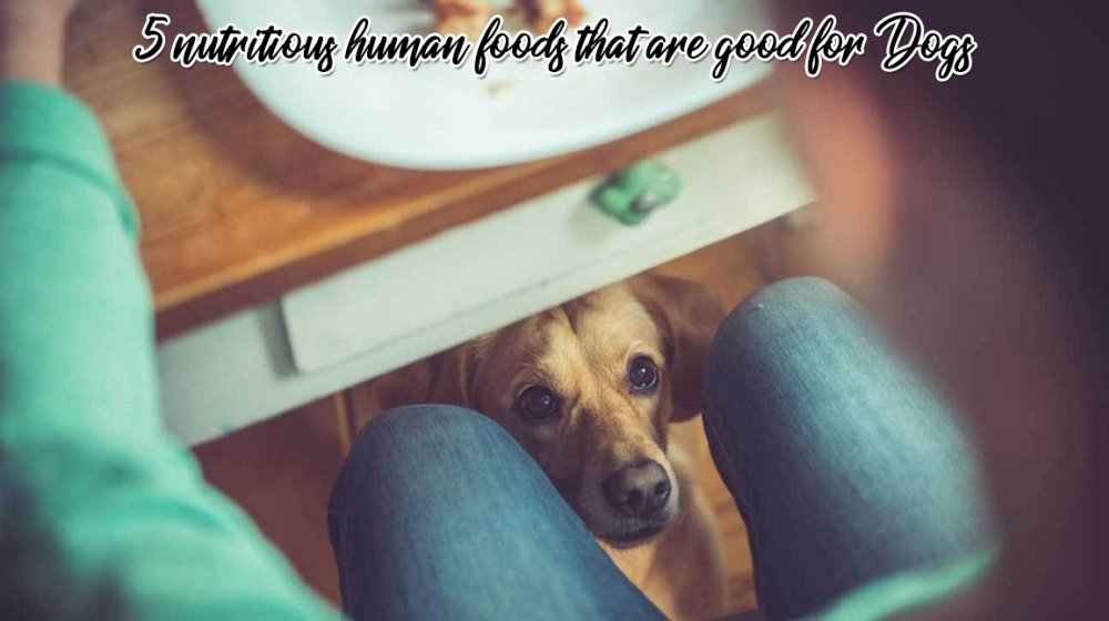 5 Nutritious Human Foods That Are Good For Dogs