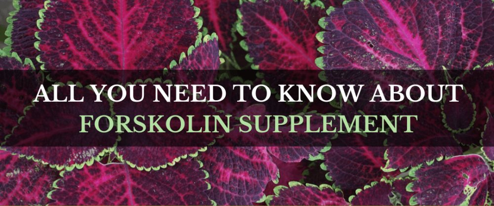All You Need To Know About Forskolin Supplement