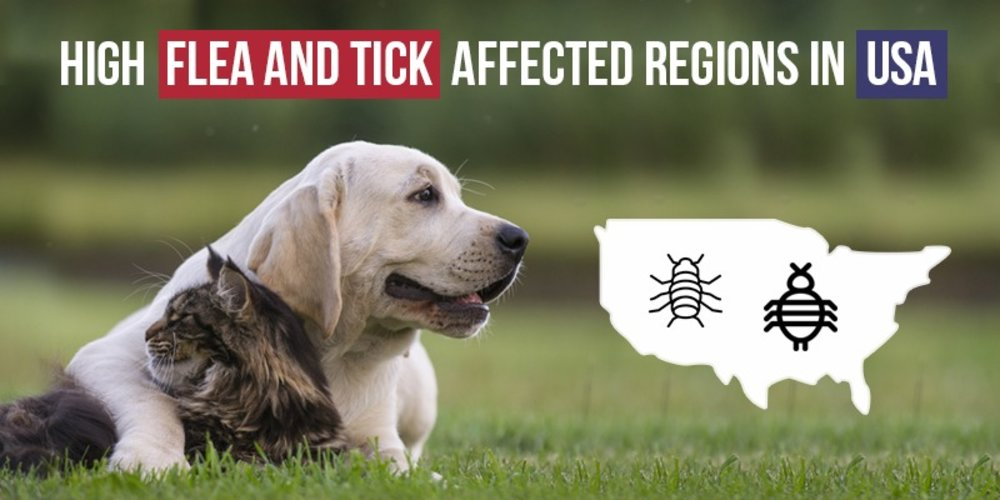 High Flea And Tick Affected Regions In USA