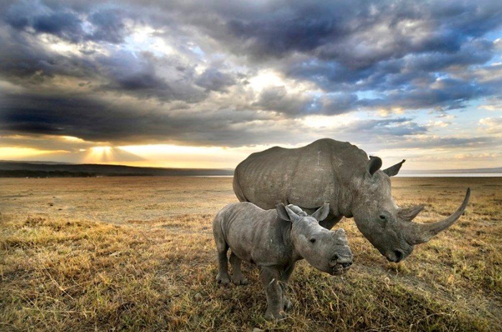 Amazing Wildlife Nonprofits You've Never Heard Of