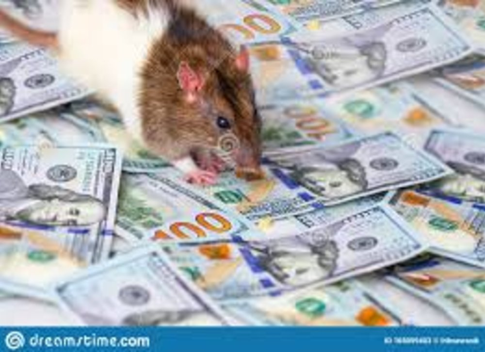 +27621179374 Spiritual Miracle Rats money Spell in Pretoria, Durban, Boksburg