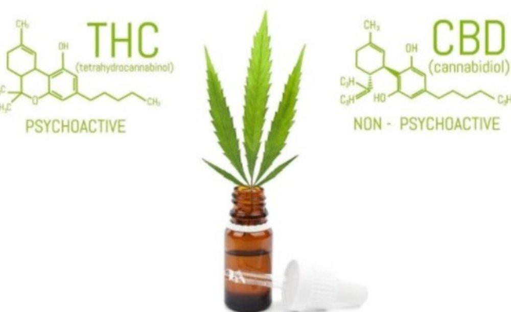 CBD vs. THC: Battle of the Plant!