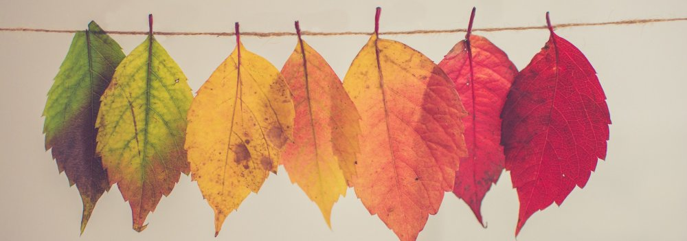 Tips For Staying Healthy This Fall
