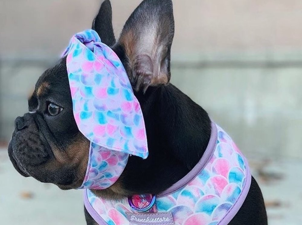 Best Opportunities To Make Use of the Frenchie Puppies