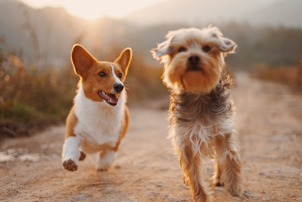 How CBD Oil Can Benefit Your Dog