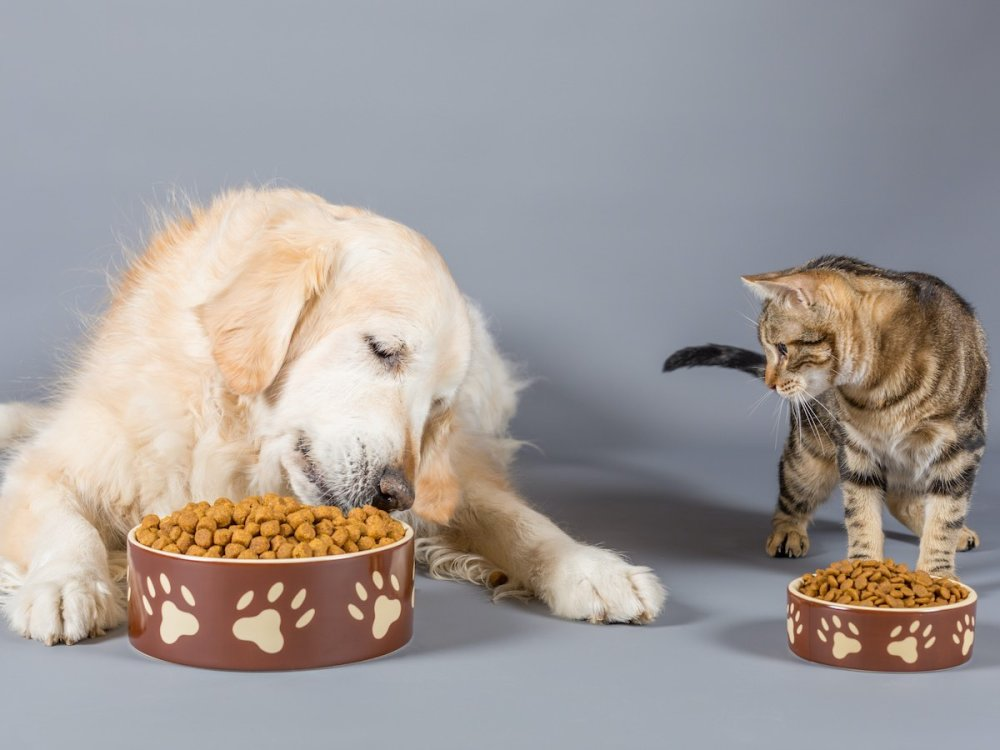 Picking the Best Pet Food For Your Dogs and Cats