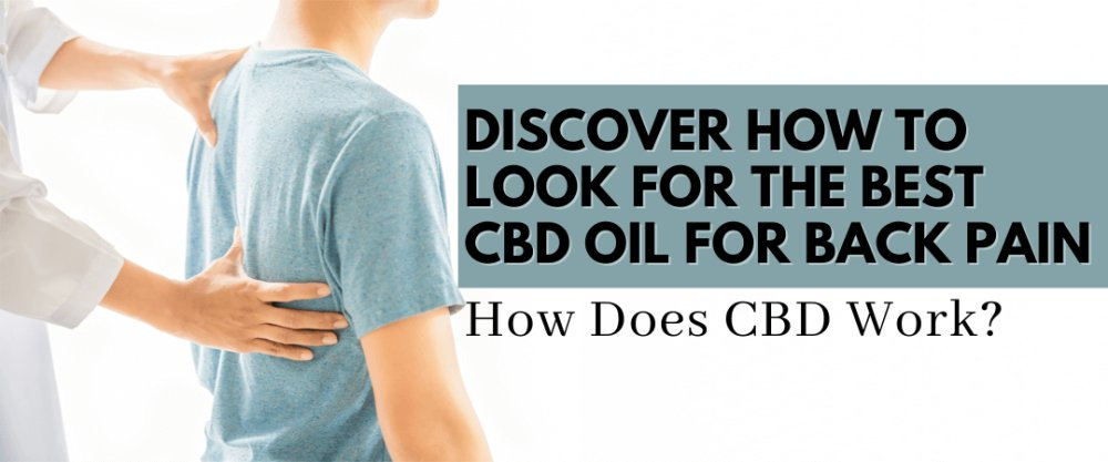 Discover How To Look for the Best CBD Oil for Back Pain; How Does CBD Work?