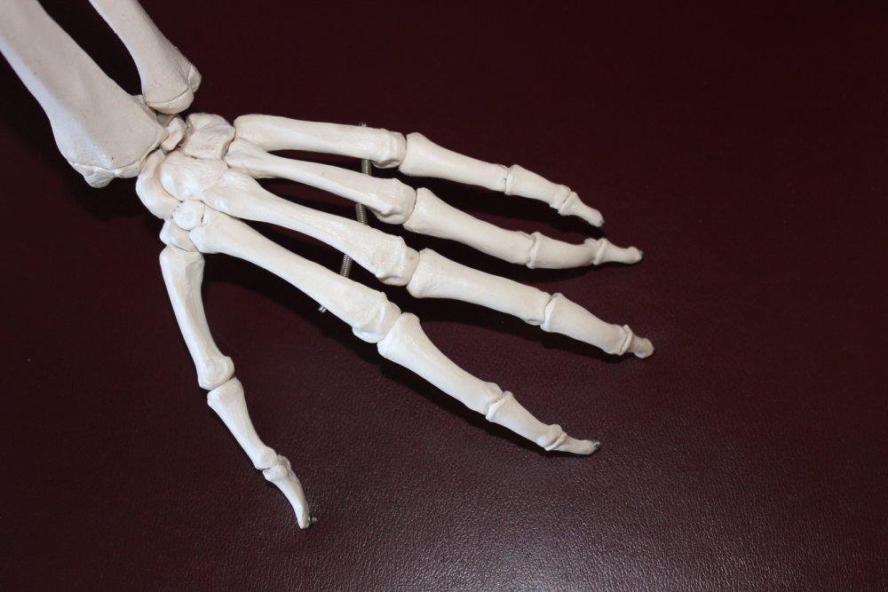 Thomas Gehrmann | Keep your Bones Healthy