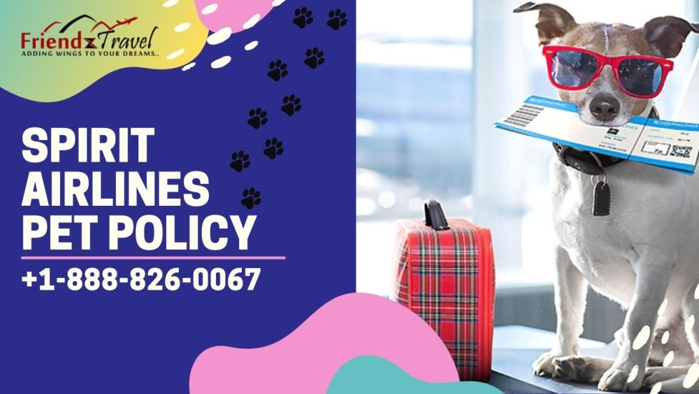 Spirit Airlines Pet Policy 2021