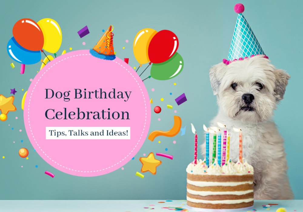 Dog Birthday Celebration - Tips, Talks and Ideas!