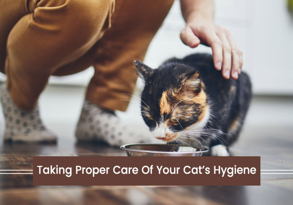 Taking Proper Care Of Your Cat's Hygiene
