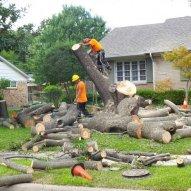 Roseville Tree Service