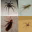 How Natural Ways Help To Get Rid Of Insects From Your Home?