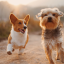 Pets: Can a Dog's Personality Change?
