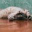 Pet Wellness: Don't Do This to Your Cat - It Might Upset Him