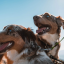 5 Ways to Show Your Pet Love in Their Own Language