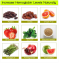 5 Natural Ways To Increase Hemoglobin