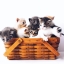 3 Top Reasons Why Cats Are Better Pets Than Dogs