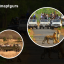 Top Things to do in Sariska Tiger Reserve - A detailed Guide