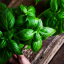 Incredible Benefits of Basil Leaves You Need to Know