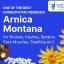 How Does Arnica Montana Homeopathy Help Bruising?