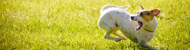 Why Heartworm Prevention is Important in Dogs