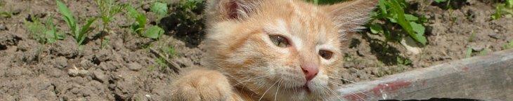Purr-fect Funniest Cat Video