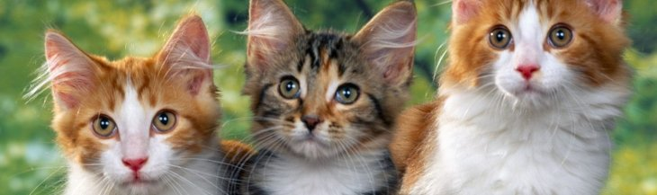 Tips for Introducing a New Cat to the Family Cat