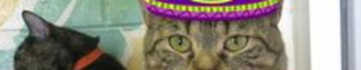Funny Cat Video With Mexican Hat Dance