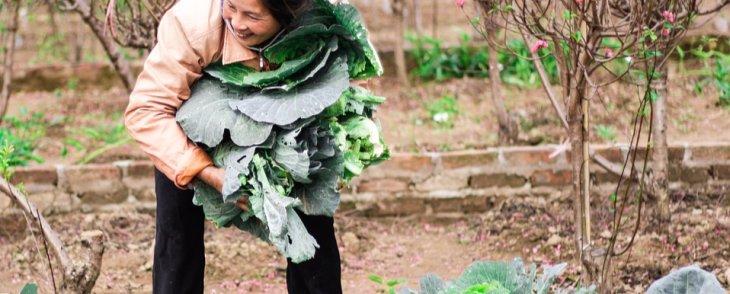 Why Consider Organic...