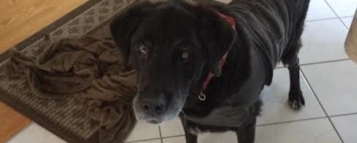 Old Timer is in URGENT need of a Foster Home