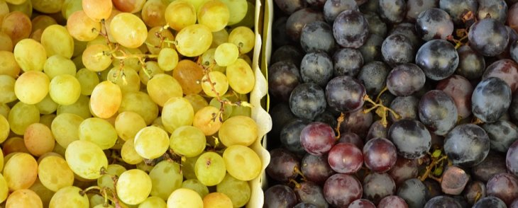 Colorful Grapes: Different or Similar