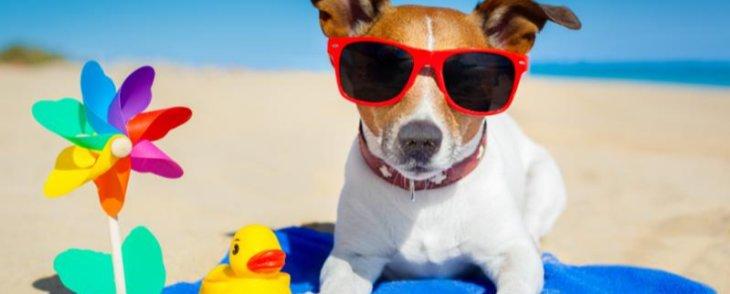 Enjoying the Dog Days of Summer