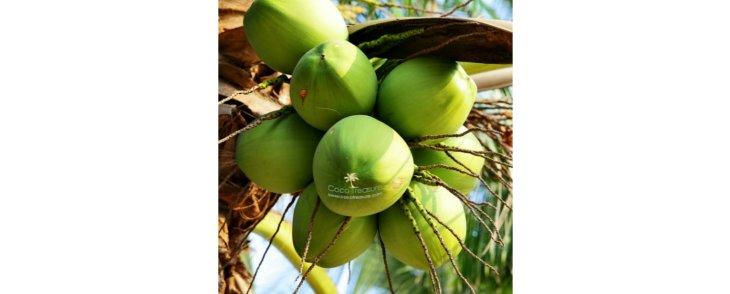 4 Tips for Choosing the Best Coconut Oil